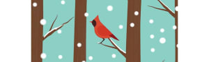 Cardinals in the snow - 10 Christmas Cards